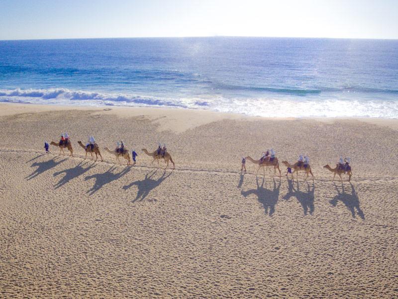 Transportation Service Los Cabos, BCS - Camel Tour