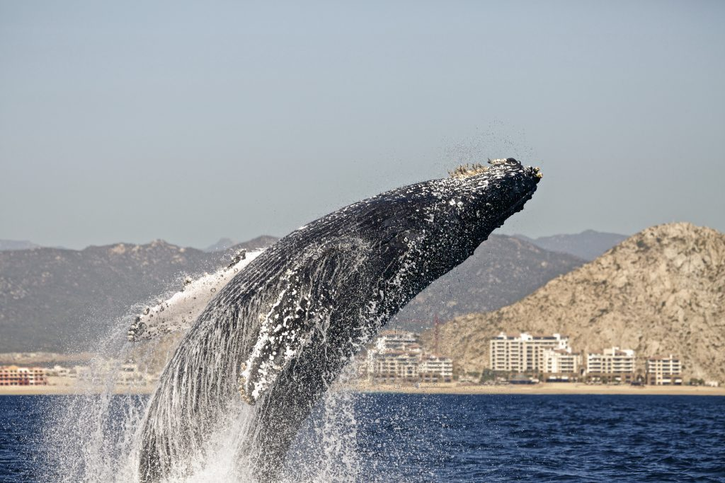 whale_watching_tour